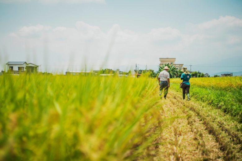吃米不知道米價?國際稻米期貨2個月來大漲近30%