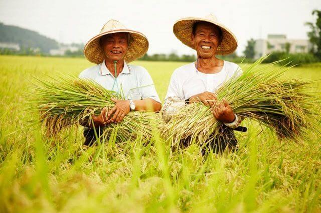 中興米用生命成就台灣米的精彩